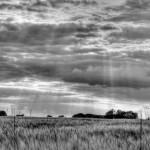 Sonnenstrahlen über einem Feld