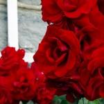Bildnummer: 00004 - Rosenblüten