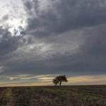 Bildnummer: 00038 - Einsamer Baum