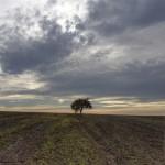 Bildnummer: 00039 - Einsamer Baum