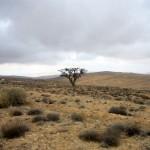 Bildnummer: 00022 - Baum in der Wüste (Jordanien)