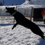 Hund fängt Schneeball