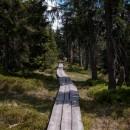 der schmale Holzpfad